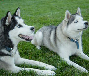 Juneau & Aspen...proudly bred by us.