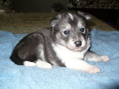 Vale at 3 weeks of age.